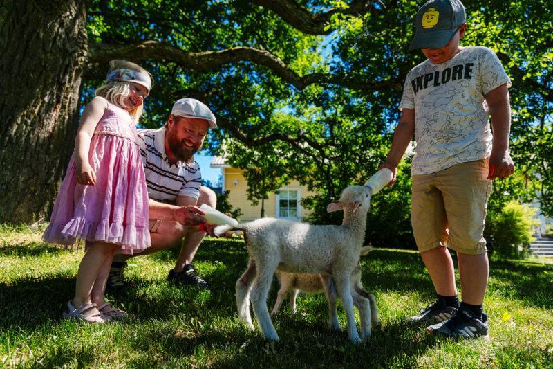 Lapsiperhe syöttää karitsoille maitoa