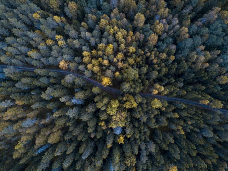 Metsämaisema kuvattuna taivaalta käsin