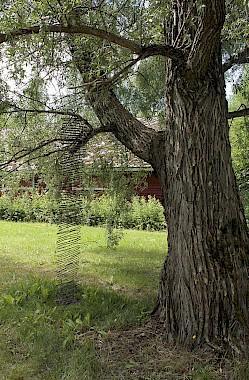 Puu ja teos puussa