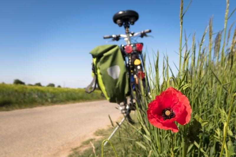 polkupyörä seisoo tien varrella, nurmikolla kukka